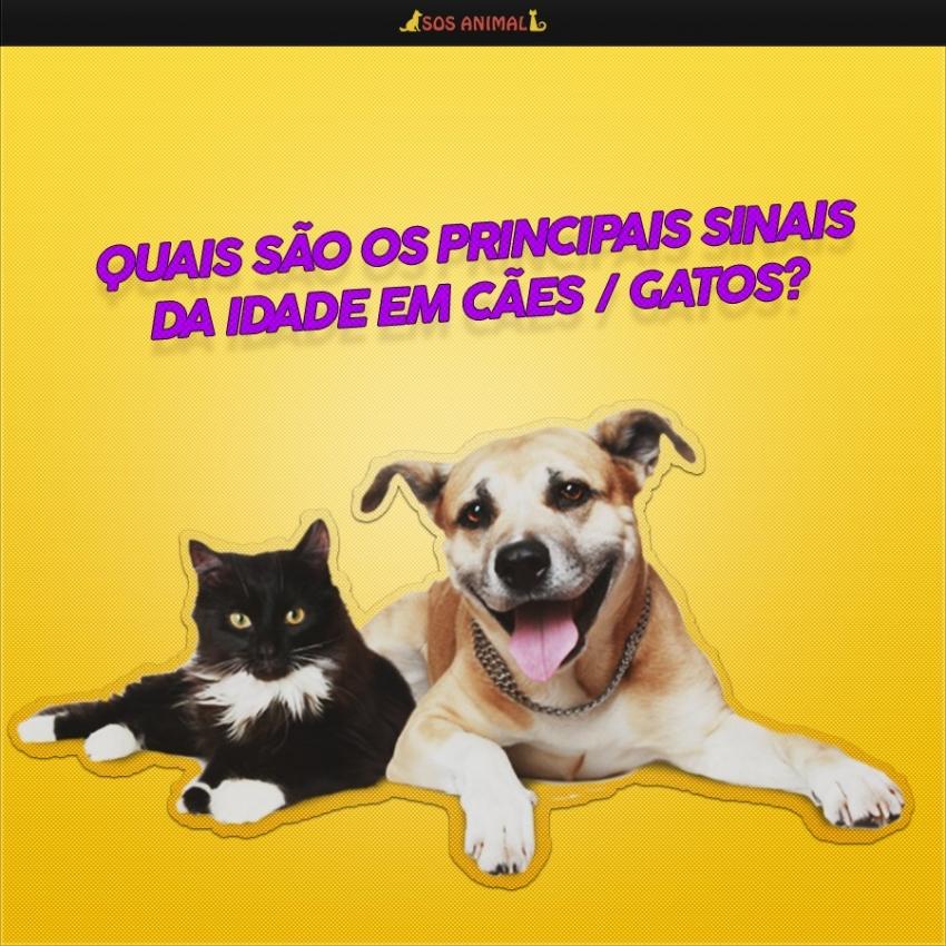 Quais são os principais sinais da idade em cães / gatos?