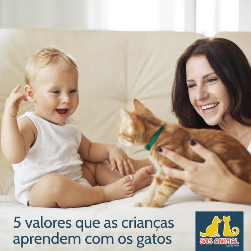 5 valores que as crianças aprendem com os gatos