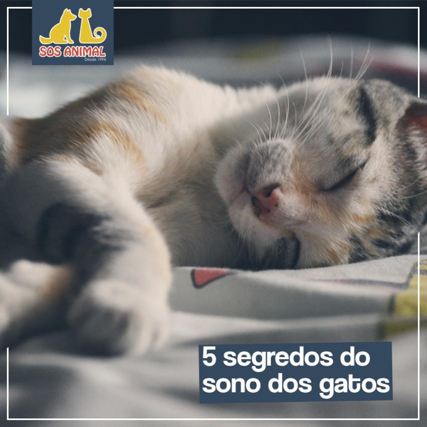 5 segredos do sono dos gatos