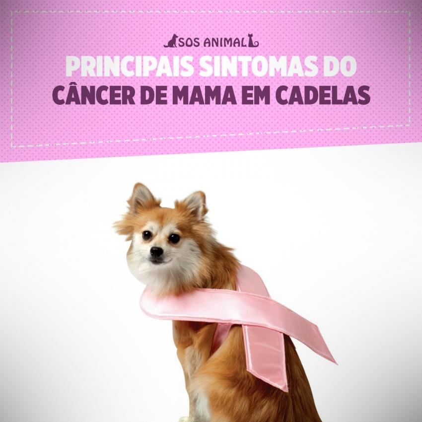 Principais sintomas do câncer de mama em cadelas
