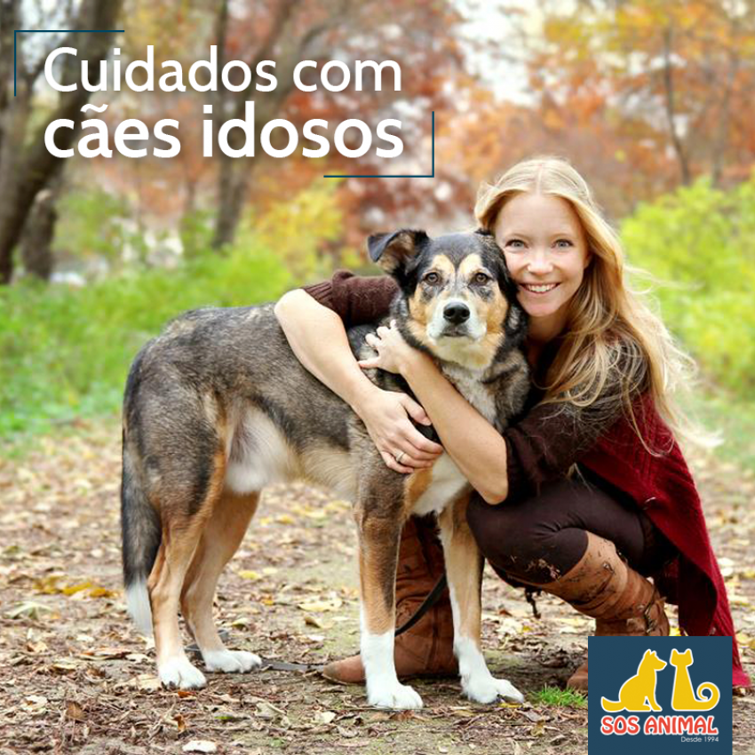 Cuidados com Cães Idosos
