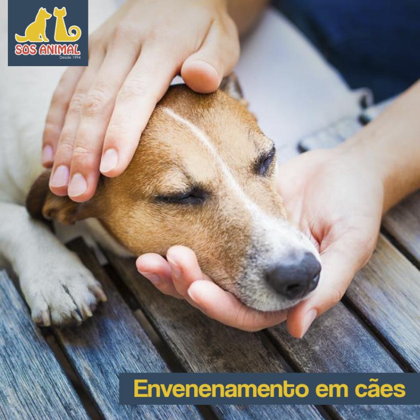 Envenenamento em cães