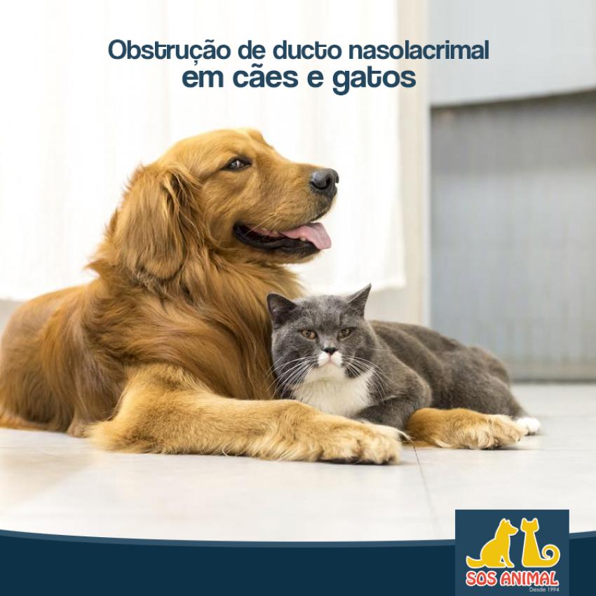Obstrução de Ducto Nasolacrimal em Cães e Gatos Levando a Epífora