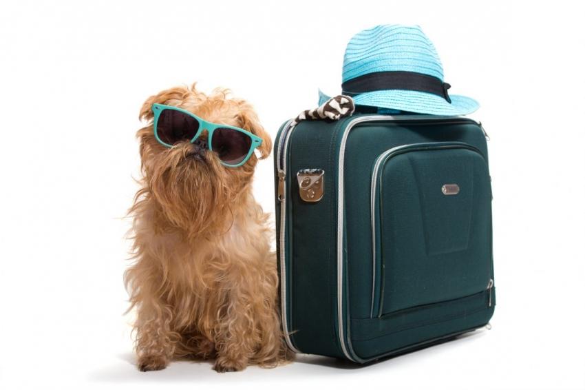 Viajando com seu cão